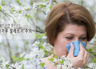 수원 꽃가루 알레르기